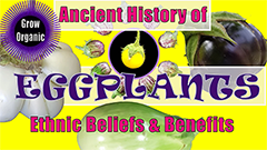 History of eggplants thumbnail